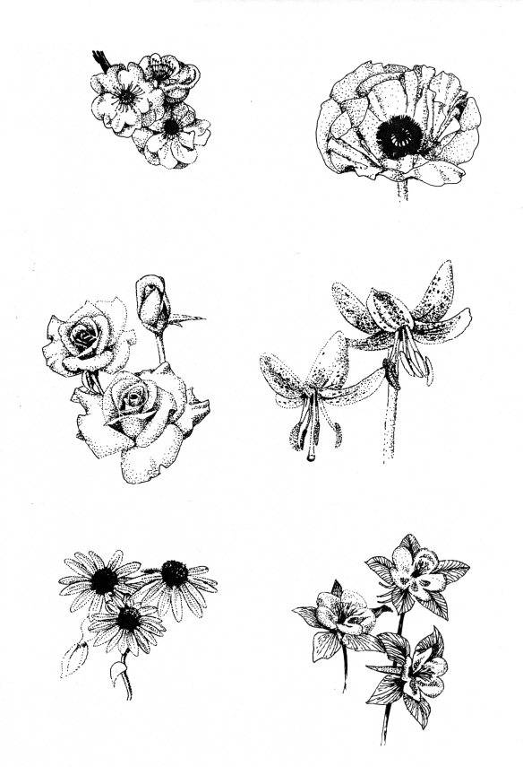 Pen and Ink flower illustrations